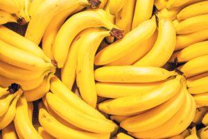 Frutas que Devem e Não Devem ser Oferecidas aos Cachorros