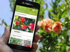 Veja Tudo Sobre o Aplicativo PlantNet Para Identificar Plantas